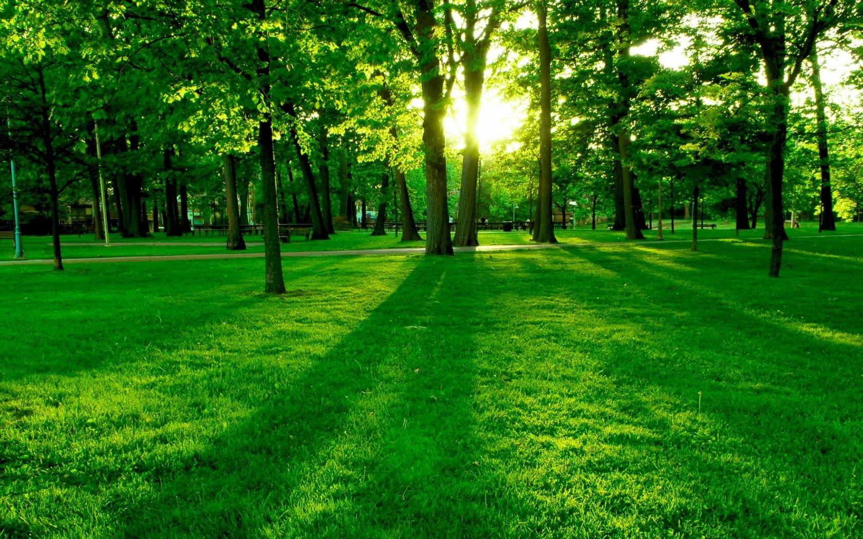 阳光大树微信头像图片