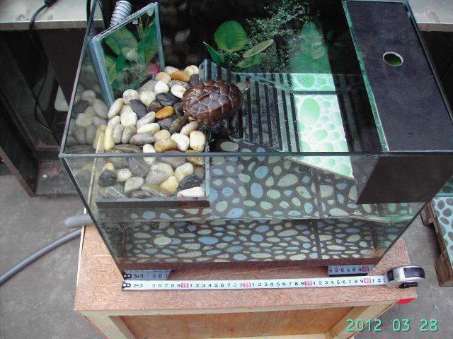 福州哪里有卖类似的乌龟缸啊?图片