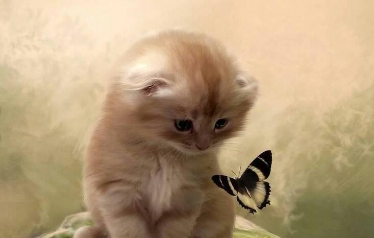 求可爱小猫咪的照片