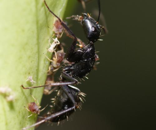 蚂蚁蚂蚁 歌词