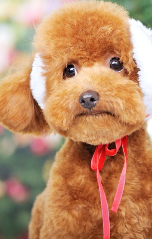 什么小狗最可爱