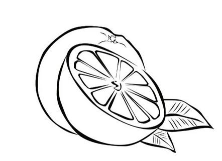手绘橙子高清图片