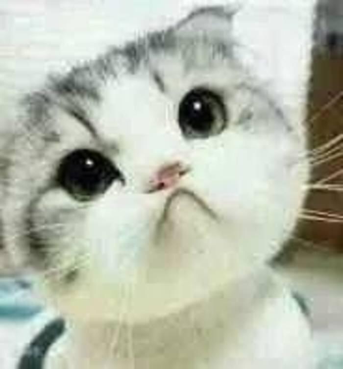 谁有这个猫的其他表情包图片