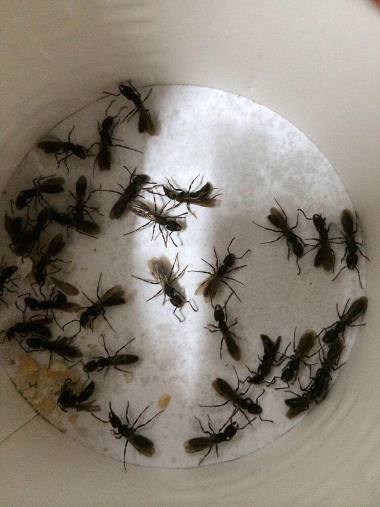 家里最近爬吃饭这样的鹦鹉,不是成群结队的,一不好一两个爬出来,有蚂蚁鱼出来两个图片