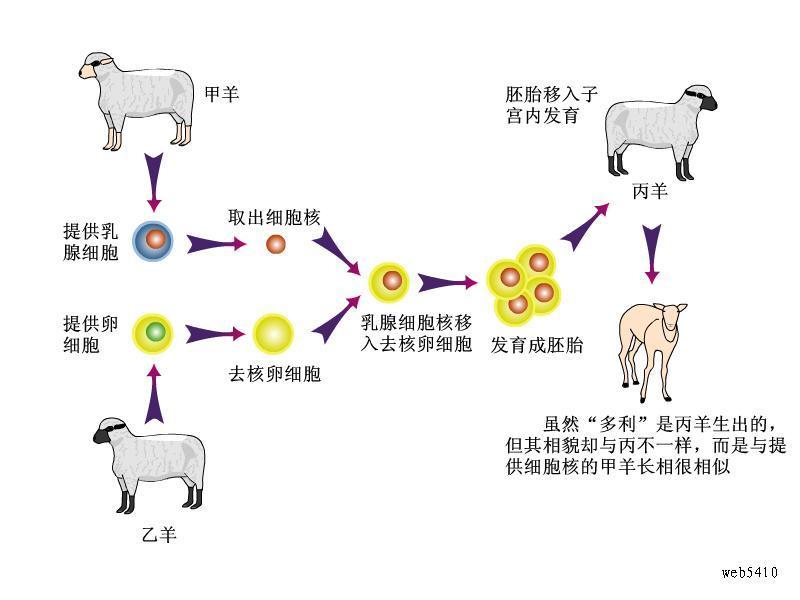 克隆羊多莉的产生过程