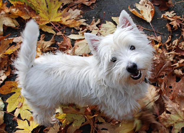 请教这张图片上的狗叫什么 谢谢