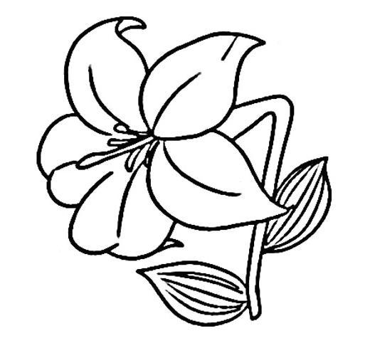 百合花怎么画