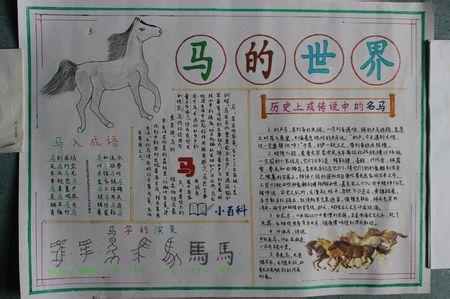 马的世界手抄报图片