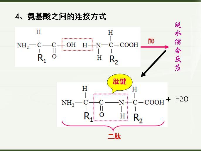 此为,在某些蛋白质分子中.二硫键对其三级结构的稳定也起重要作用.
