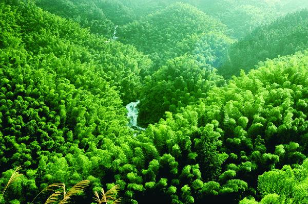 森林工程的培养要求图片