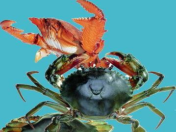 贻贝是双壳类软体动物,外壳呈青黑褐色,生活在海滨岩石上.