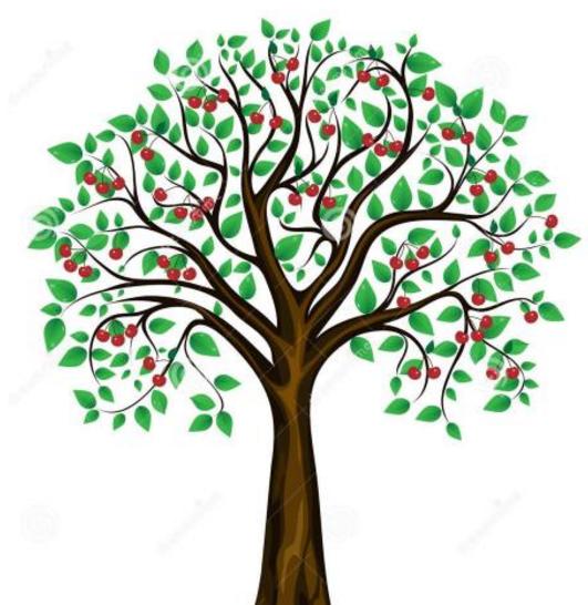 櫻桃樹長什么樣簡筆畫圖片