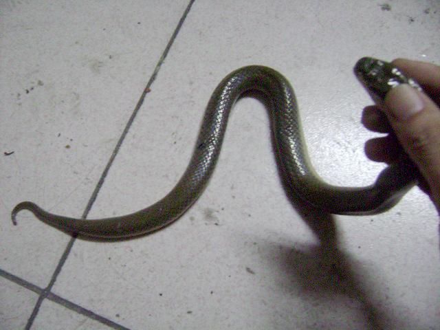 昨天晚上在河边抓了一条蛇