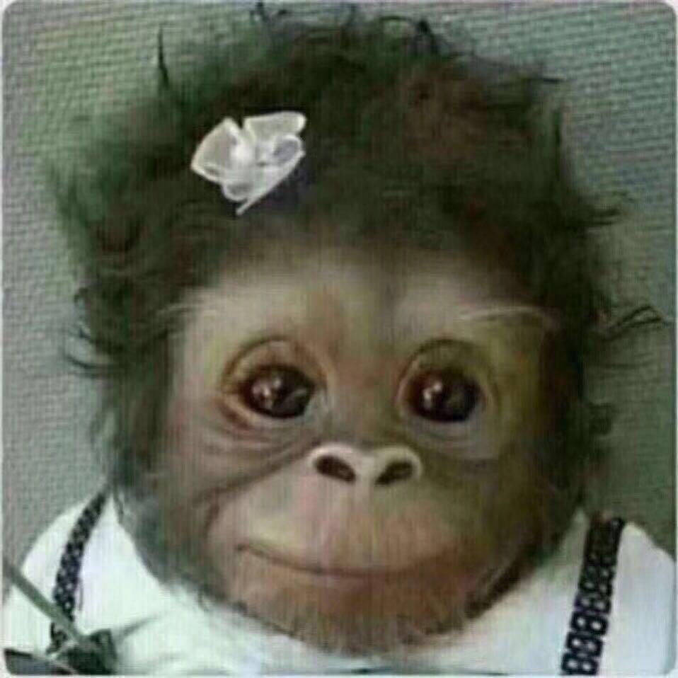 一张可爱的戴花猩猩图片.