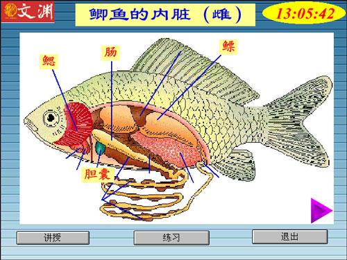 东方人写鱼图_鱼的内脏(图)