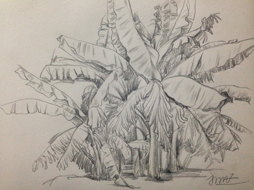 简笔画 手绘 素描 线稿 853_640