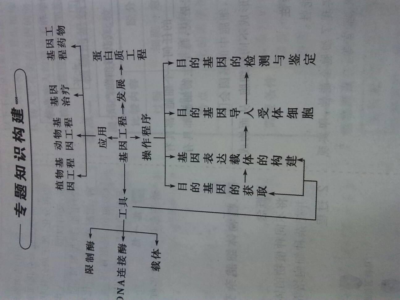 高中人教专题版选修三知识一基因工程生物美女啪啪虚啪高中被框图图片