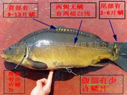 鱼的联想创意图片大全