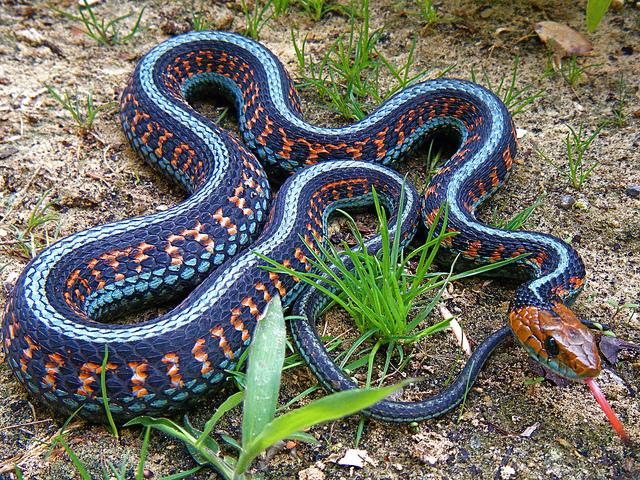叫什么蛇呢?