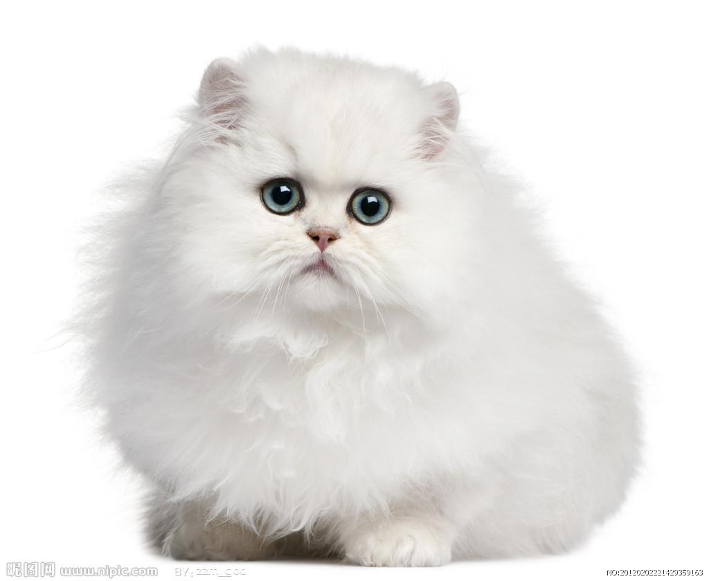 有没有非常帅气的猫图片(包括动漫图片,但最好是真实的.