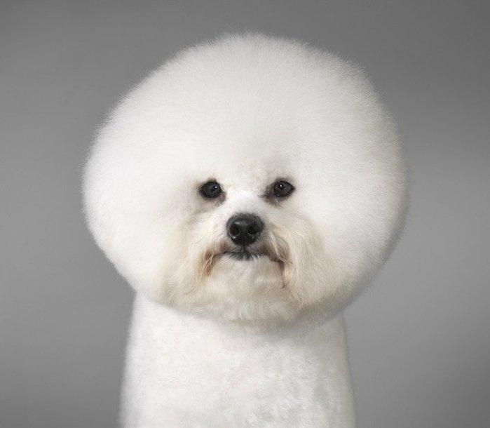给我几张最萌的狗狗照片,有赏