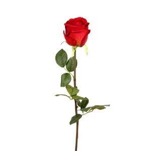 七夕玫瑰花图片瑰花图片单枝的
