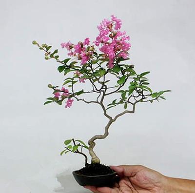广东盆栽植物适合室内常见有哪些