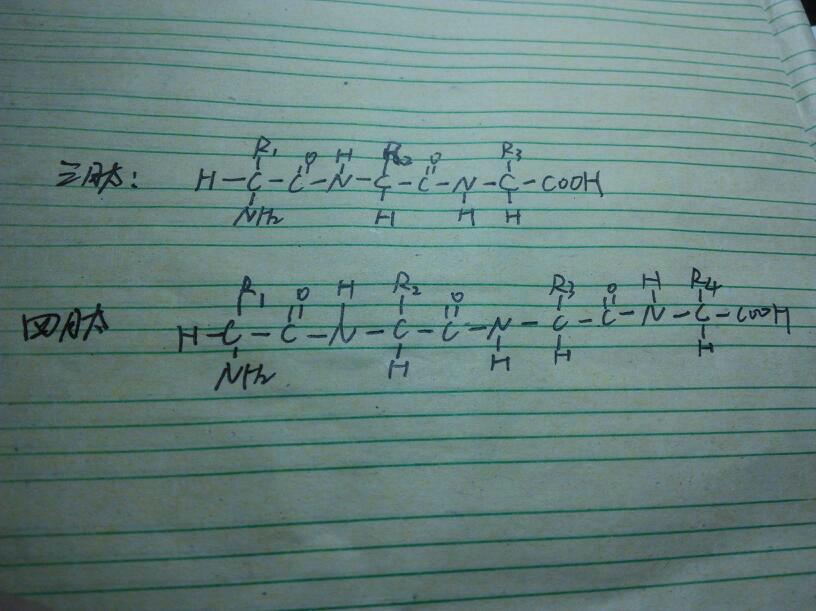 三肽和四肽结构图画法,要图片,快