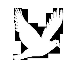 跪求一张完全由白鸽画图的线条图,ps或windows自带组成背景画的都图方法qt绘制加速工具图片