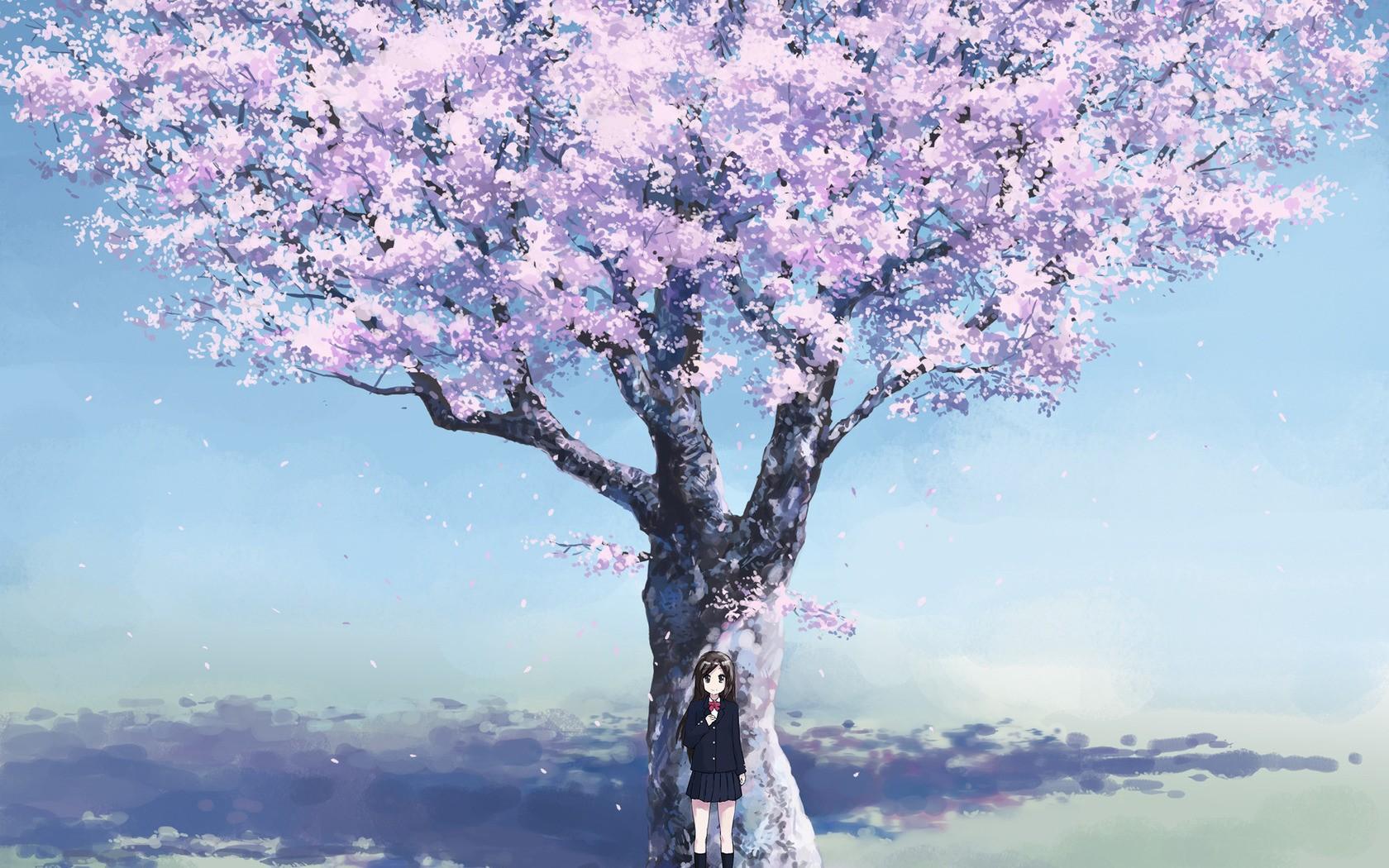 壁纸 花 树 桌面 1680_1050