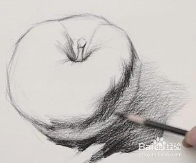 素描步骤十:刻画灰面的素描关系,画出苹果球体的感觉.
