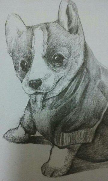 可爱的动物图片和漫画人物.要素描的!