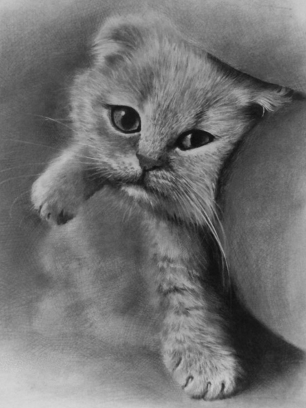 猫咪铅笔画图片有哪些猫非常可爱,属于猫科动物,分家