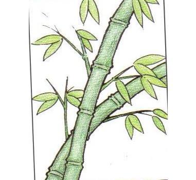 竹子怎么画图片
