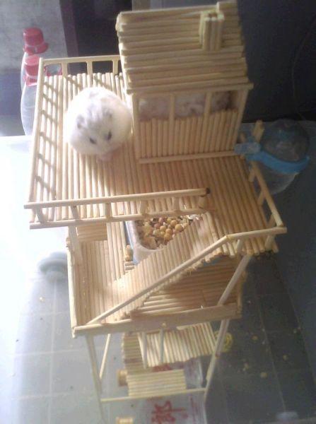 一次性筷子手工制作的房子仓鼠能住吗