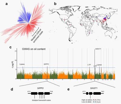 全基因组关联分析的分析原理