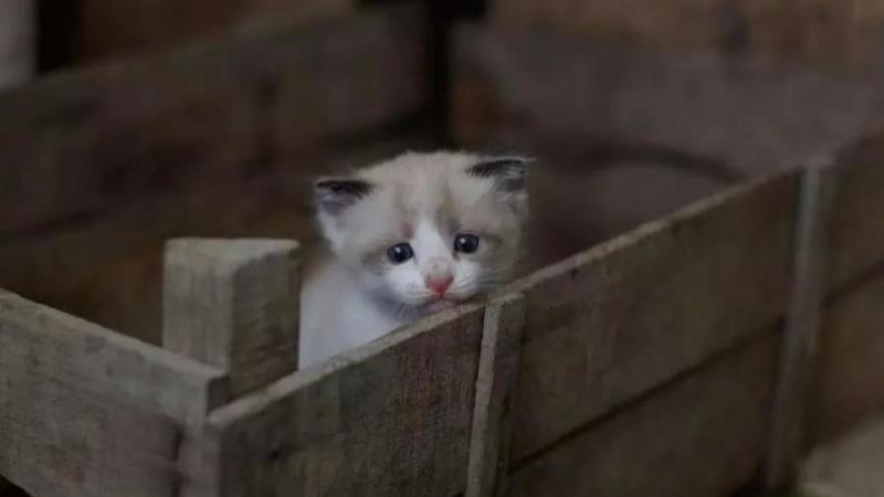 宠物黑市被曝光:宠物沦为繁殖机器,而你买的猫狗,只能活一周的头图