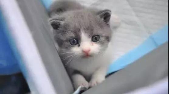 """花25万""""复活""""的猫,跟原来的完全一样吗?的头图"""
