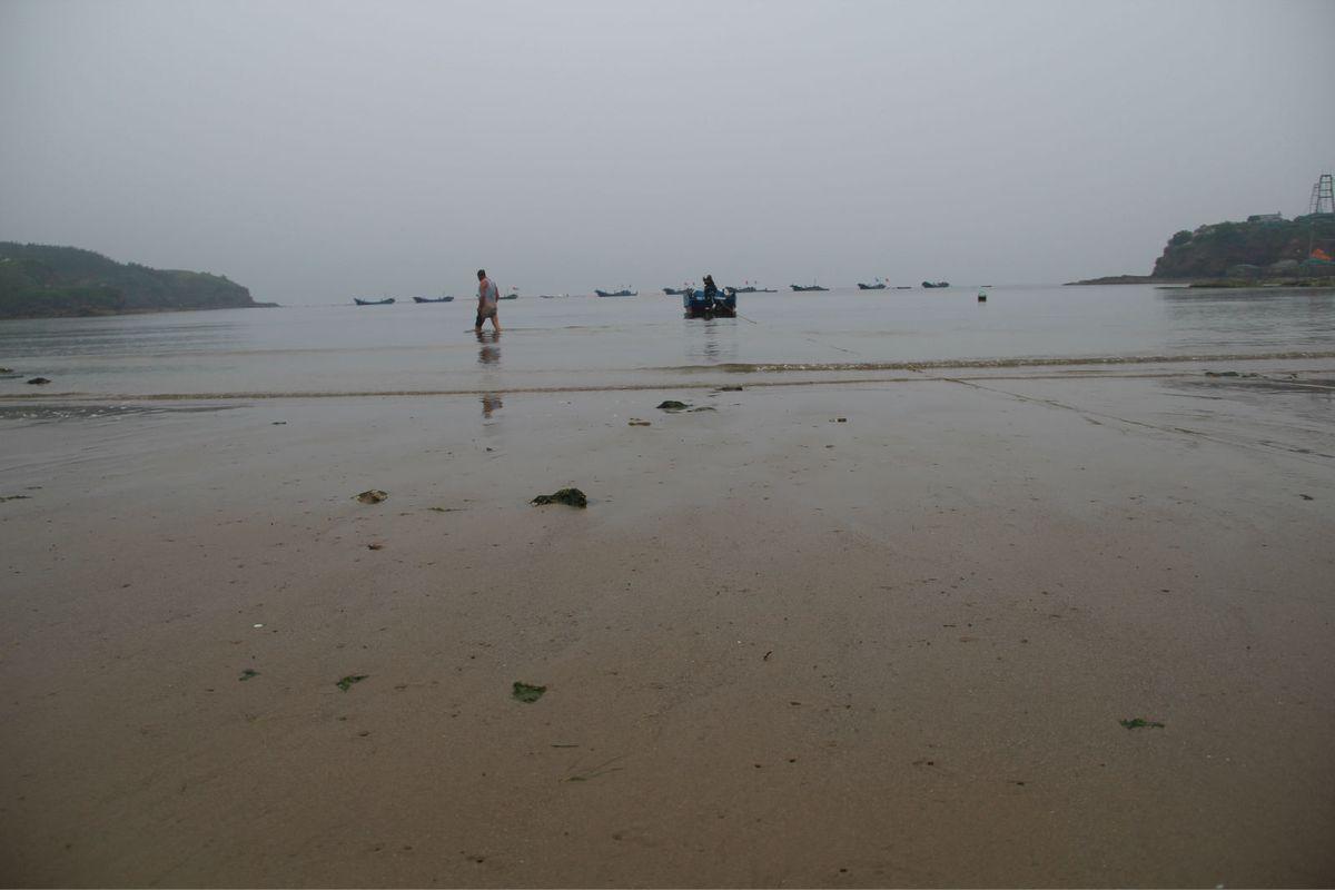 海滩有小螃蟹,海带,生蚝等图片