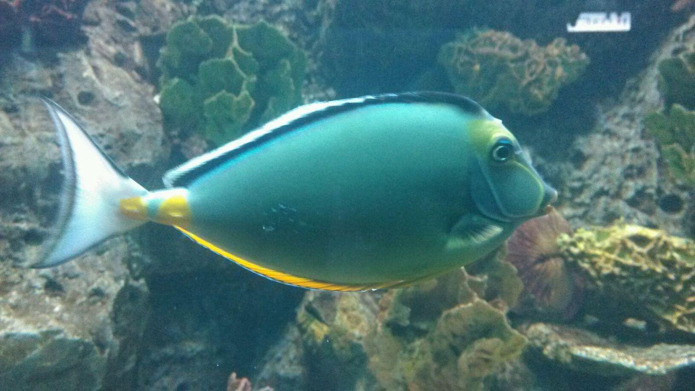 壁纸 动物 海底 海底世界 海洋馆 水族馆 鱼 鱼类 1419_800