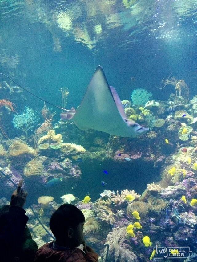壁纸 海底 海底世界 海洋馆 水族馆 600_800 竖版 竖屏 手机