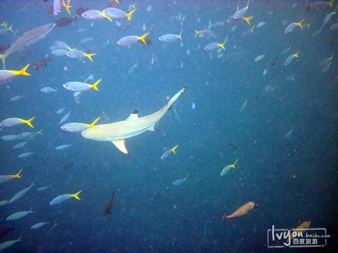 壁纸 动物 海底 海底世界 海洋馆 水族馆 鱼 鱼类 680_510
