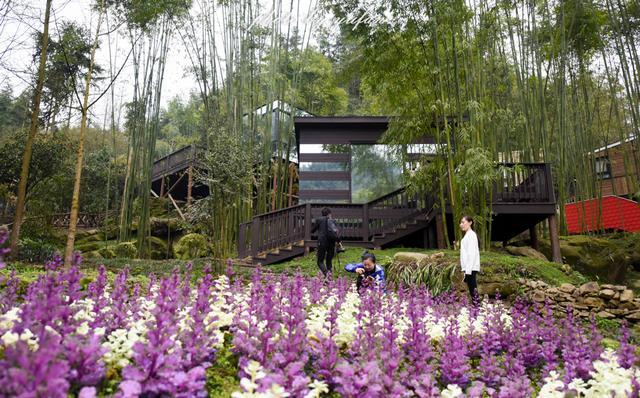 悠游都江堰,住几晚森林树屋,过几天隐世慢生活