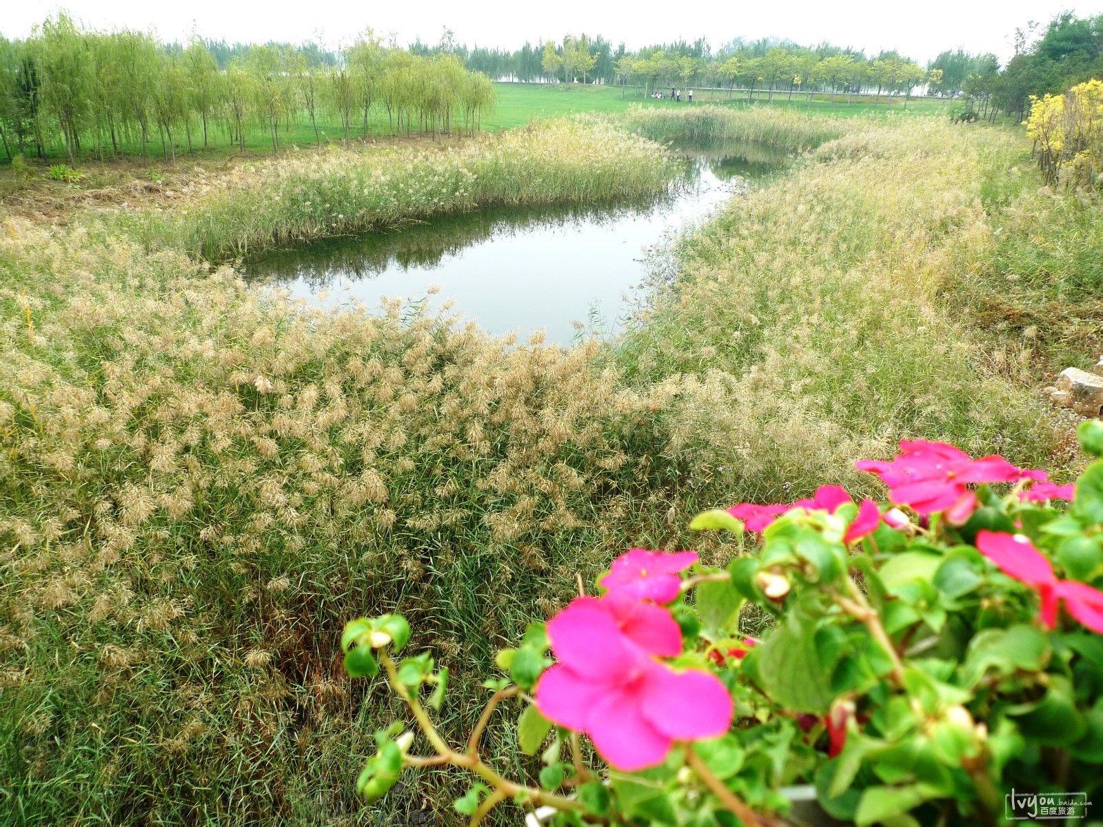 东营植物园