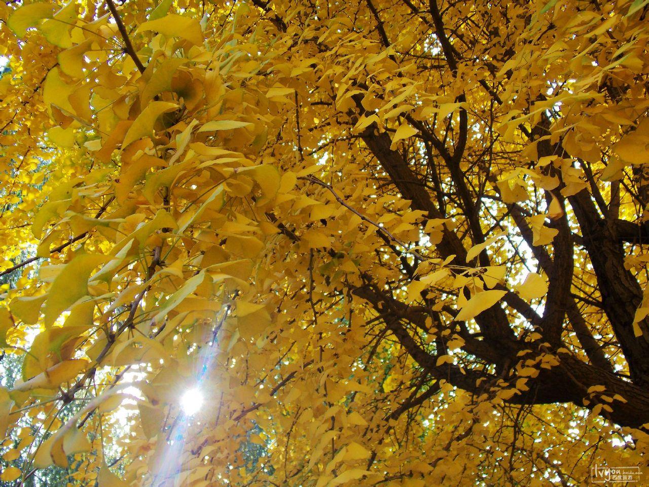 秋天的北京植物园