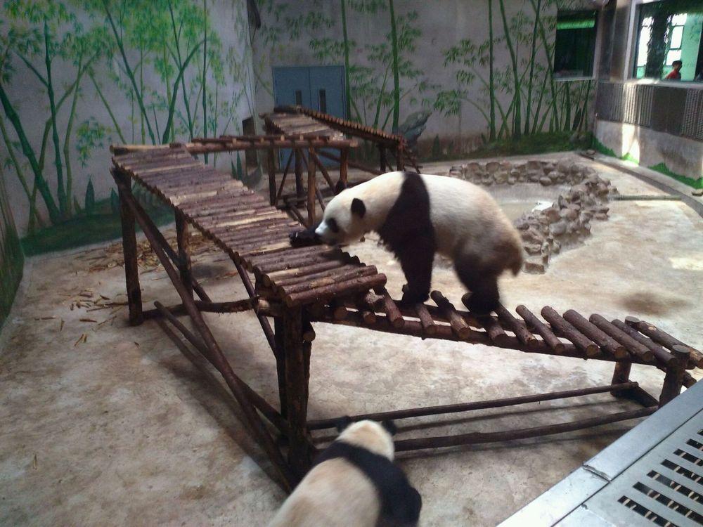 天津光合谷――动物园