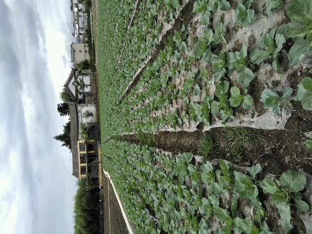 小谷雀大花园图片