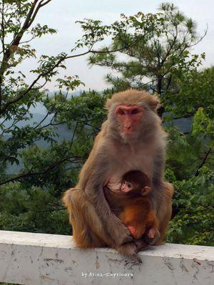 特别乖巧可爱的小猴子,萌萌哒.图片