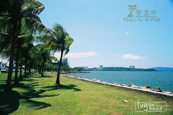 高清宽屏椰林风景壁纸