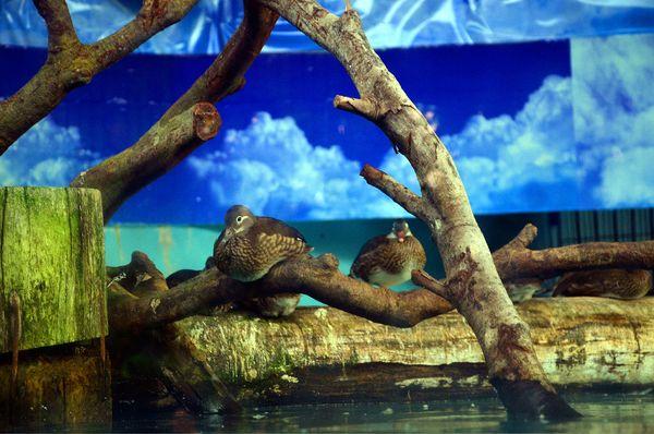 充满活力的长隆野生动物园